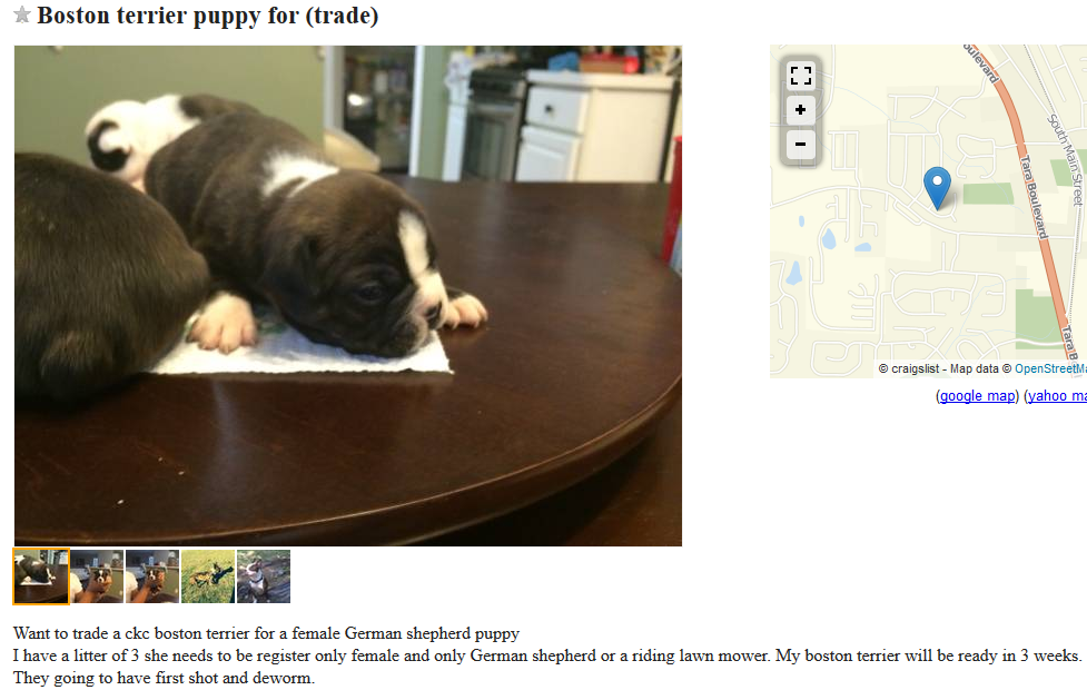 craigslist dog