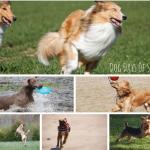 Dog Days Of Summer – Wordless Wednesday