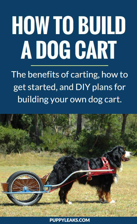 Teaching your dog how to pull a cart can be fun and practical. It's called dog carting, and it's not just for giant breed dogs. Here's the benefits of carting, how to get started with your dog, and plenty of DIY dog cart plans so you can build one of your own. #dogs #dogtips #dogexercise #diydogstuff
