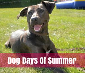 dogs loving summer