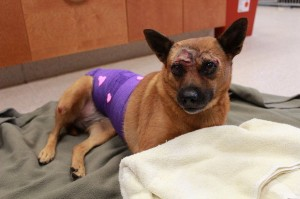 dog thrown from car