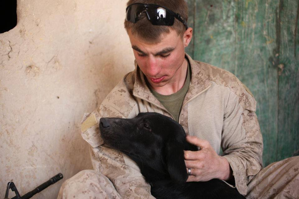 service dog to be reunited