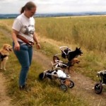 Paralyzed Dogs Love Playing In Their Wheelcarts