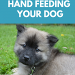 The benefits of hand feeding your dog