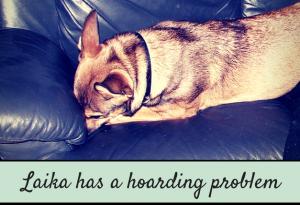 dog has hoarding problem