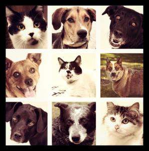 oakland county pet adotion center