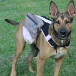 Outward Hound Dog Backpack Review