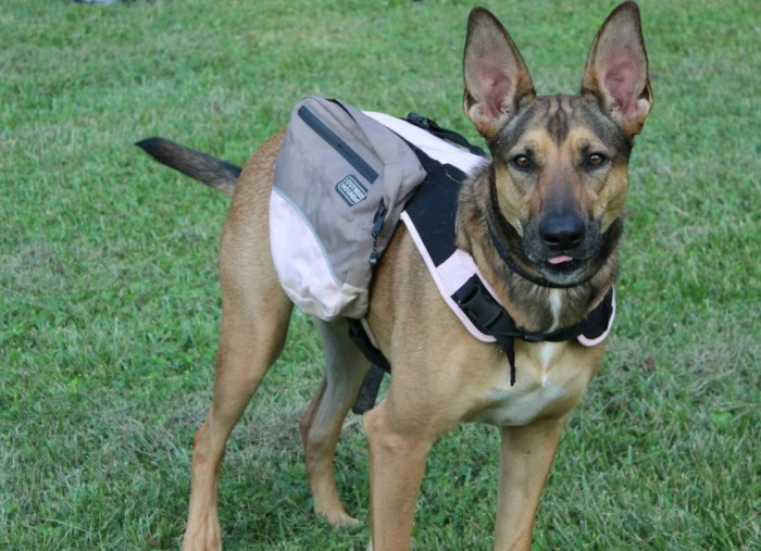 The Benefits of Using a Dog Backpack
