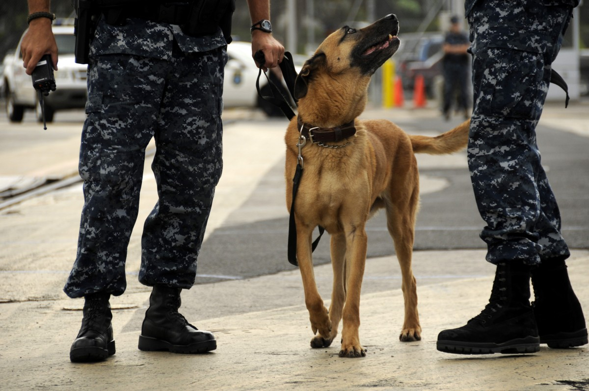 military dog reunited