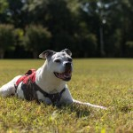 Give Cancer The Paw – Remembering Sasha