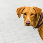 9 Tips For Walking Your Reactive Dog