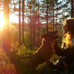 14 Safety Tips For Your Dog During Hunting Season