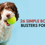 Quick Ways To Relieve Dog Boredom