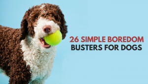 26 Quick & Simple Ways to Relieve Dog Boredom