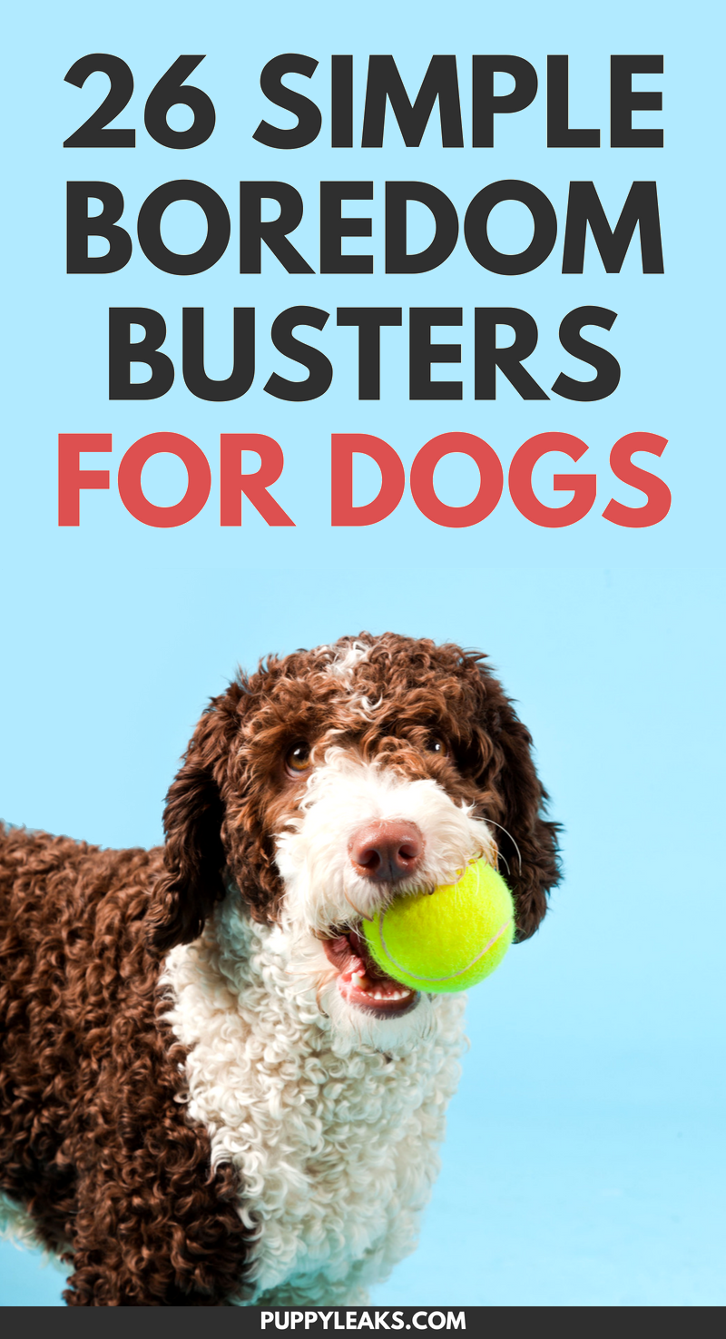 Is your dog bored? Need some simple ways to keep your dog busy, active and entertained? Check out our list of 26 quick and simple ways to relieve dog boredom. From homemade dog toys to simple trick training, these boredom busters will provide your dog with plenty of mental stimulation and exercise. #dogs #dogtips #dogcare #dog #lifehacks #doglovers #dogadvice