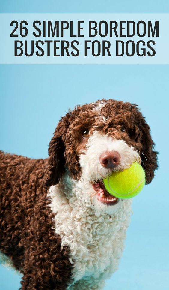 Is Your Dog Bored? Here's 26 Simple Boredom Busters For Dogs.