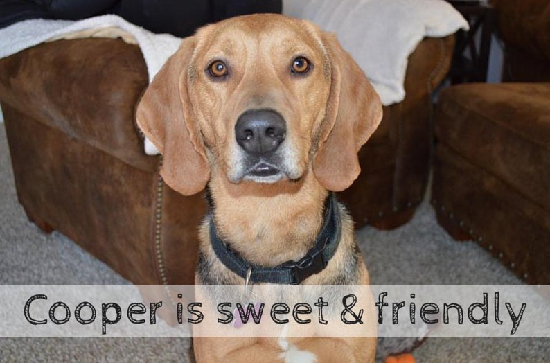 cooper is available for adoption