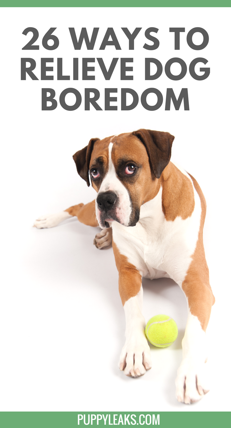 Is Your Dog Bored? Here's 26 Quick Ways to Relieve Dog Boredom.