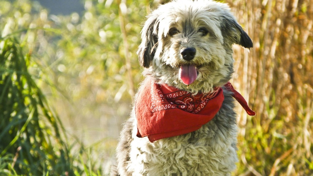 safety tips for your dog during hunting season