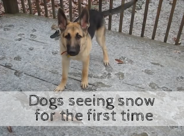 Dogs Seeing Snow For the First Time