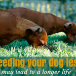 Feeding Your Dog Less May Lead To A Longer Life