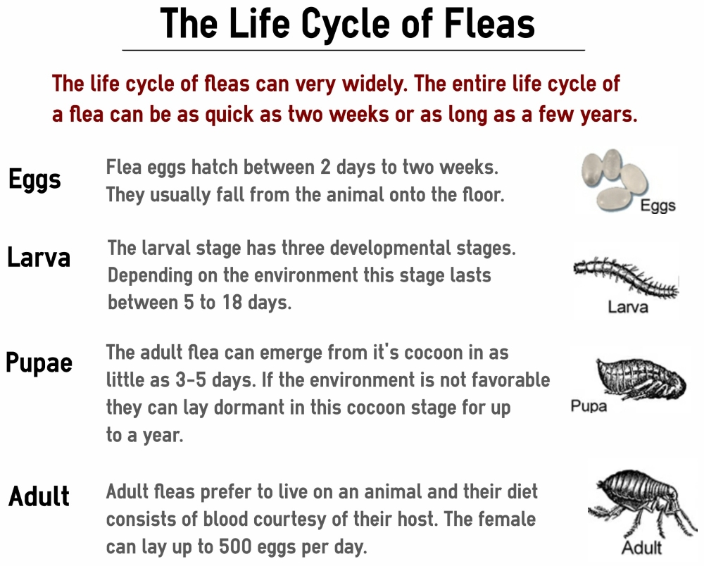 The Ultimate Guide to Getting Rid Of Fleas for Good ...