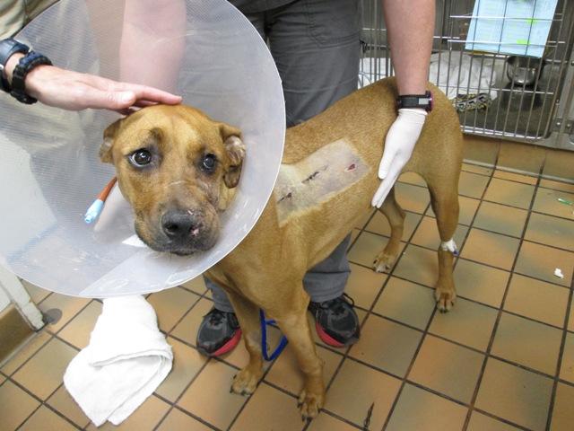 dog shot in face
