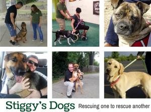 stiggy's dogs