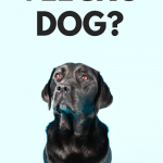 Velcro dogs