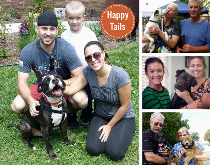 shelter adoption smiles happy tails