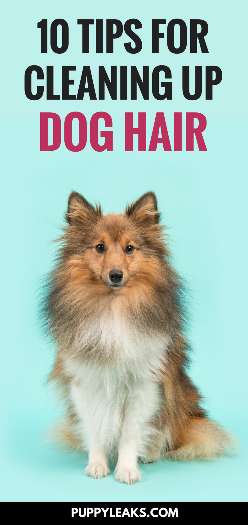 Does your dog's hair get everywhere? Here's 10 easy tips for cleaning up dog hair. From using rubber gloves on furniture to using tape to pick off pet hair from your clothes, these are my favorite hacks for picking up pet hair.