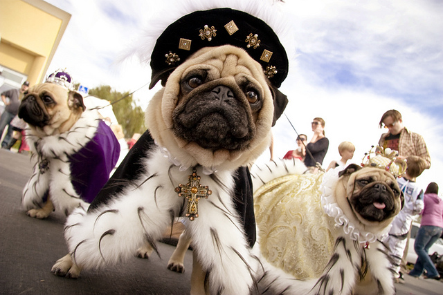 30 Amazing Dog Costumes for Halloween & 30 Amazing Dog Costumes for Halloween - Puppy Leaks