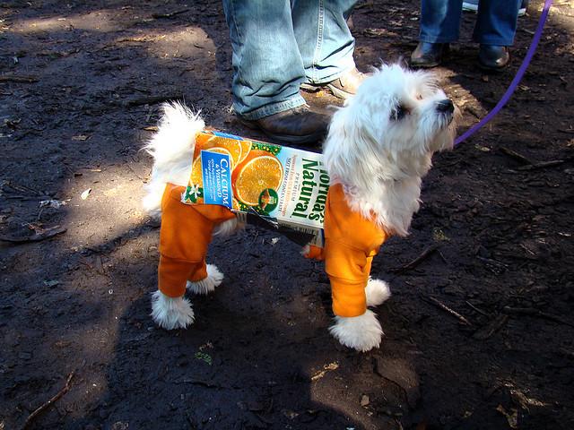 best dog costume halloween