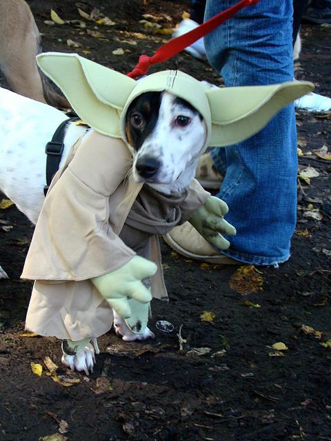 best dog halloween costume