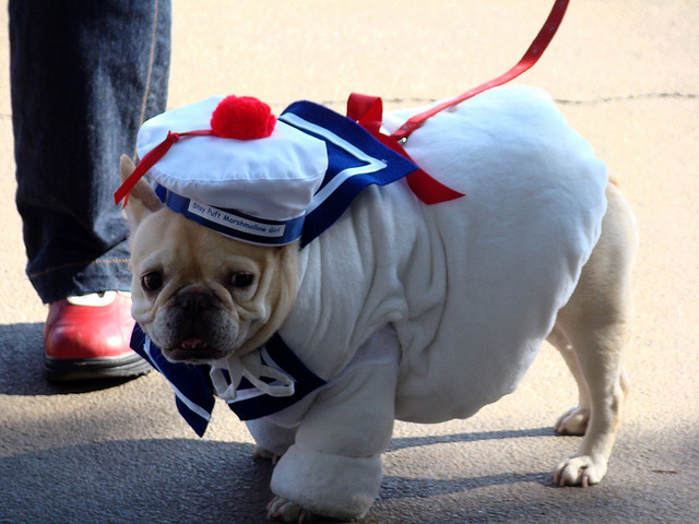 best dog halloween costume & 30 Amazing Dog Costumes for Halloween - Puppy Leaks