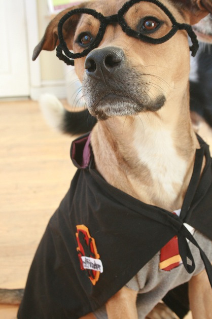 best dog halloween costumes & 30 Amazing Dog Costumes for Halloween - Puppy Leaks