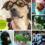30 Amazing Dog Costumes for Halloween