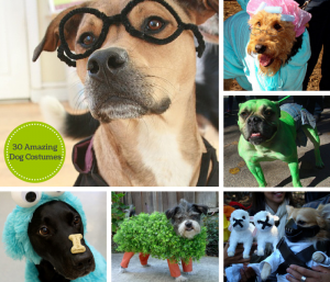 amazing dog costumes for halloween