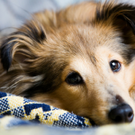 7 Tips for Cleaning up Dog Hair Efficiently