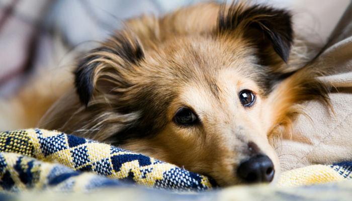 10 Simple Tips For Cleaning Up Dog Hair