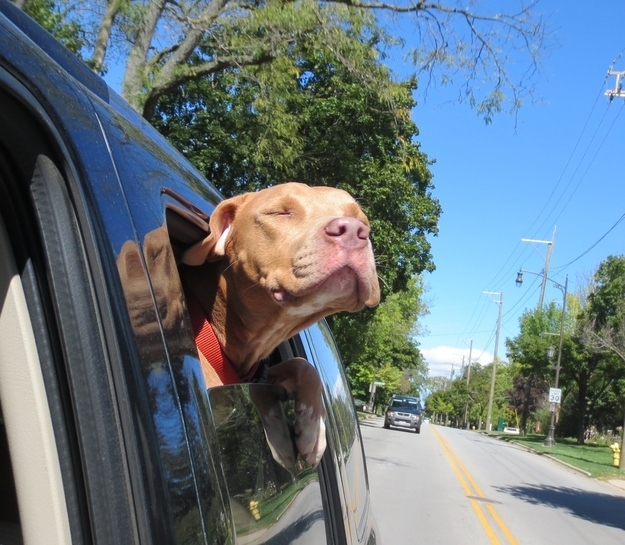 Freedom Ride via One Tail at a Time in Chicago