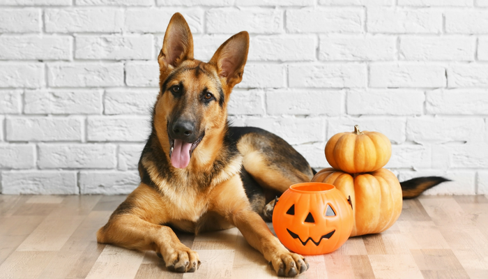 7 Halloween Safety Tips For Your Dog
