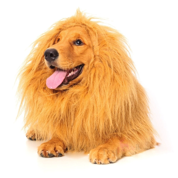 30 great dog costumes for halloween - Dogs With Halloween Costumes On