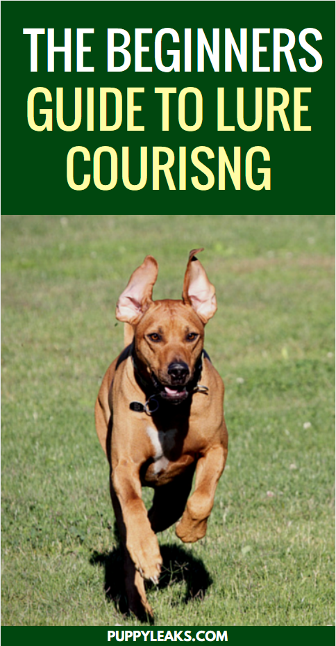 The Beginners Guide to Lure Coursing