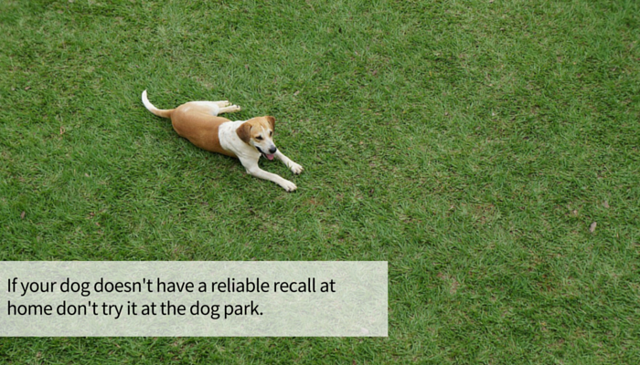 13 Simple Steps to Improve Your Dogs Recall
