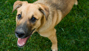 13 Steps to Improve Your Dogs Recall