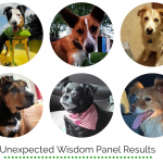 Unexpected Wisdom Panel Results – October Edition