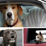 Do Dogs Love Waiting In Cars?