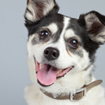 9 Tips to Help Your Adopted Senior Dog Adjust to a New Home