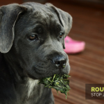 Roundup: Judging Dogs and Their Owners